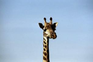 Safari a pie en Arusha NP