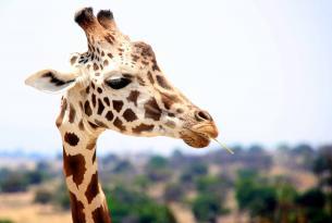 Safari amaneceres: tour por Tanzania