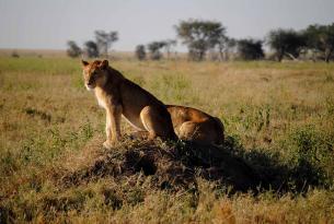 Safari Amaneceres