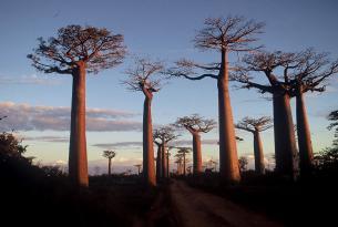 Maravillas de Madagascar: la isla de los baobabs