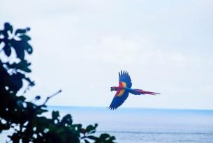 Costa Rica al completo a tu aire