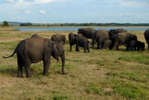 Sri Lanka: Sonidos de Mineriya