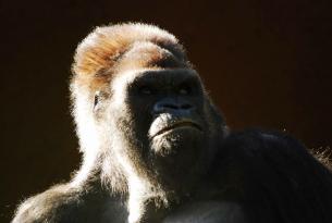 Trekking de los Gorilas de Uganda en GRUPO