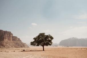 Jordania por libre en coche de alquiler