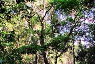 Fin de año en el Amazonas