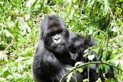 Rutas Gorila Trek