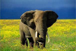 Memorias de África Especial fin de año