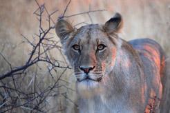 Botswana Flying Safari