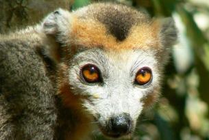 Expedición Madagascar