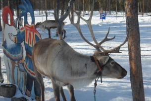 Laponia puente de diciembre en cabañas de lujo en Saariselka