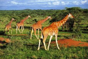 Vive Kenia: con el PN de Aberdare, el Lago Nakuru, el Masai Mara y Amboseli