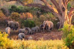 Sudáfrica con guía: desde Johannesburgo al Parque Nacional Kruger
