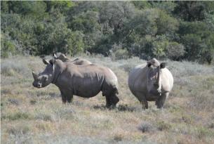 Viaje para aprender inglés y de voluntariado en Sudáfrica