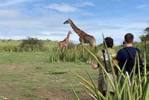 Tanzania. Safari diferente en campos de lujo