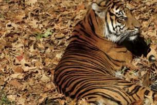 India -  Tiger  Project. - Salidas diarias de Octubre 2.013 hasta Marzo 2.014