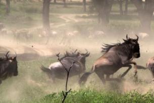 Tanzania -  El Gran Espectáculo de la Migración - Salida especial 24/Feb acompañada por un naturalista.