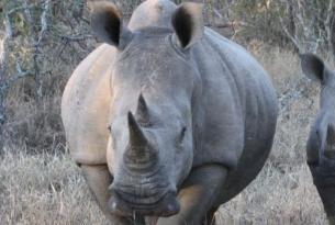 Sudáfrica -  Fly & Drive Ciudad del Cabo-Jo'burg y Parque de Kruger - .
