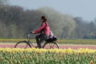 Holanda -  Por el Norte de Amsterdam en bicicleta - Salidas individuales