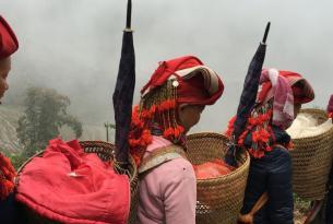Vietnam y Camboya -  Ruta de norte a sur, Trek en Sapa, kayak en Halong, ciclo en el Delta y Camboya - Salidas de Junio a Noviem