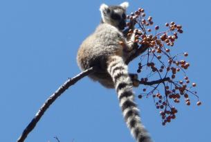 Madagascar -  Descubierta malgache - Salida especial 23 Dic
