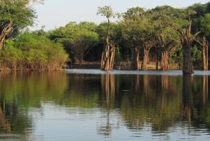 Brasil -  Expedición a la Amazonía por el río Cuieres - Guiada por A. Cánovas, biólogo. Especial Semana Santa