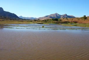 Circuito clásico por Madagascar: desde Andasibe hasta Anakao