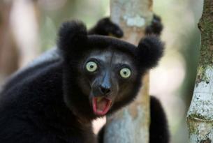 Lo Destacado Del Sur de Madagascar