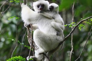 Norte De Madagascar, A Toda Naturaleza