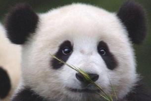 China: la Ruta del Panda