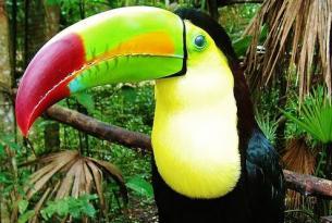 Costa Rica al natural (Tortuguero, Volcán Arenal, Monteverde, Manuel Antonio, Corcovado y San Gerardo)