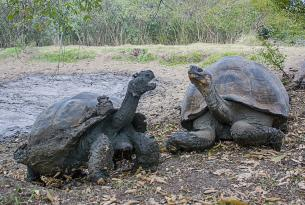 Galápagos esencial: Santa Cruz, Isla Seymour e isla Bartolomé