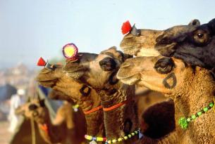 El Norte de la India a medida y con conductor (incluye Benarés)