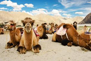 La India misterioras: Desde Leh a Ladakh con coche privado y guías en español