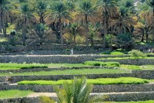 Viaje organizado a Omán.