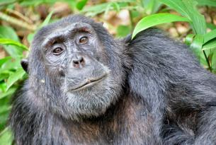 Uganda: nuestro gorila trekking de lujo (6 días)
