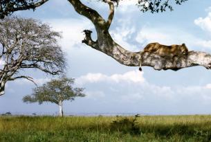 Aventura en Uganda en grupo (versión Premium)