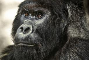 Gorilas en la niebla: Gorilas, Rinocerontes, trekkings, rafting y más