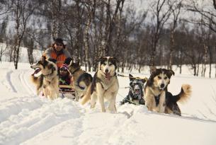 Puente de Reyes en Noruega: escapada a Lofoten especial auroras boreales y trineo de perros (7 días)