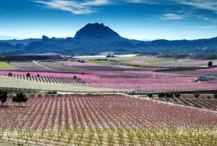 Paisajes de Murcia: Floración de Cieza, Calblanque, Mar Menor, Desierto de Gebas