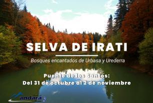 Bosques de Navarra: Selva de Irati