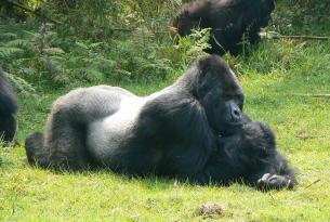 Uganda: La Senda de los Gorilas 2017