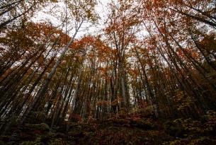 Bosques de Irati: senderismo en Navarra