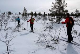Laponia Finlandesa (Saariselka): Raquetas de nieve y Esquí de Fondo