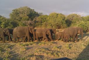 Descubriendo Sri Lanka