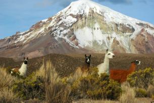Descubriendo Bolivia