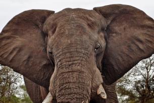 Aventura en el sur de África: Namibia, Botswana y Zimbabwe
