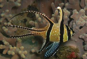 Viaje buceo Indonesia Raja Ampat