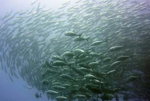 Viaje buceo Indonesia isla de Gili Tawagan