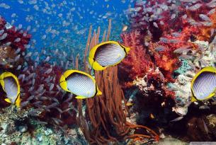 Viaje buceo safari Mar Rojo ruta Norte más Brothers