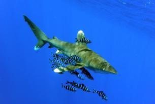 Safari Mar Rojo Ruta Sur, Brothers, Daedalus y Elphinstone.
